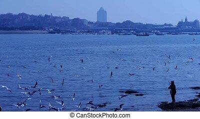 корм, женщина, seagulls, пляж