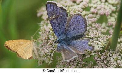 корм, world:, butterflies, цветы, insect