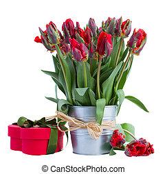 коробка, подарок, весна, горшок, тюльпан, цветы