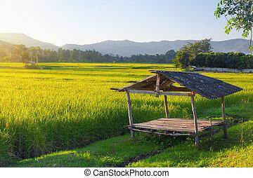 коттедж, поле, рис