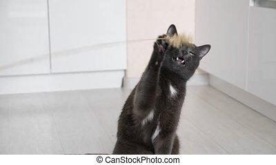 кот, серый, пол, прут, сидящий, playing, в то время как
