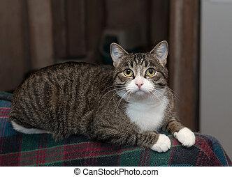 кот, сиденье, в полоску, лежащий, назад
