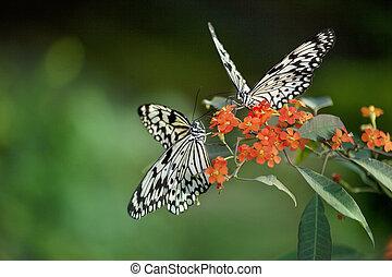 красивая, бабочка, цветы, красный