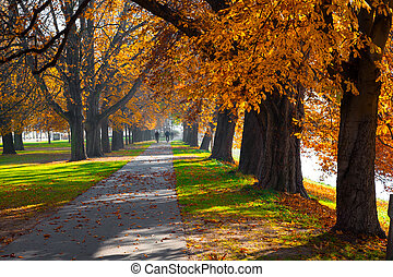 красивая, вверх, trees, осень, пешеход, дорожка, высокий, ...