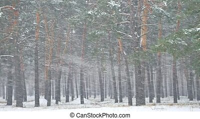красивая, вечер, зима, метель, природа, дерево, снегопад,...