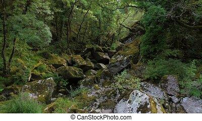 красивая, гора, река, лес