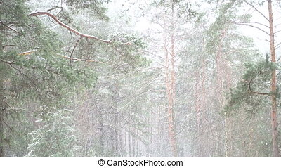красивая, душ, снег, лес