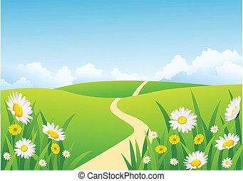 красивая, задний план, природа