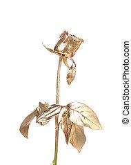 красивая, золотой, rose., фото