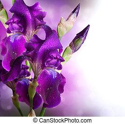 красивая, ирис, цветок, изобразительное искусство, фиолетовый, цветы, design.