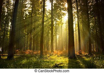 красивая, лес