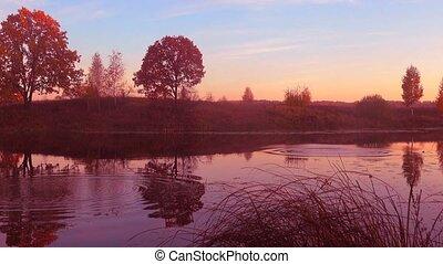 красивая, над, лес, закат солнца, lake.