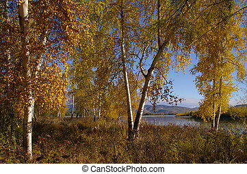 красивая, осень, пейзаж, природа