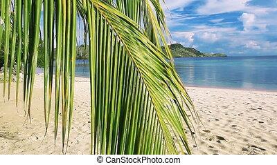красивая, пальма, пляж, лист, задний план