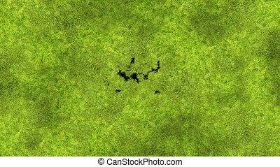 красивая, полезным, обработать, весна, animation., transitions., concept., matte., 3840x2160, новый, жизнь, природа, экран, мох, альфа, hd, ультра, покрытие, зеленый, 4k, выращивание, трава