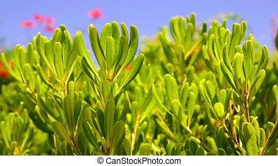 красивая, растение