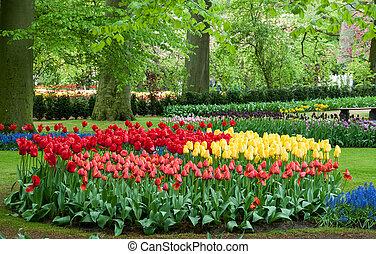 красивая, тюльпан, сад, весна