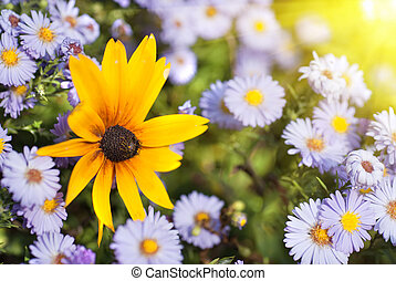красивая, цветы