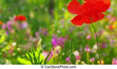 красивая, цветы, лето, поле, сад