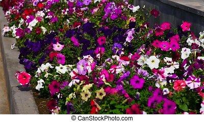 красивая, яркий, цветок, постель