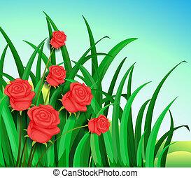 красивая, roses, сад, красный