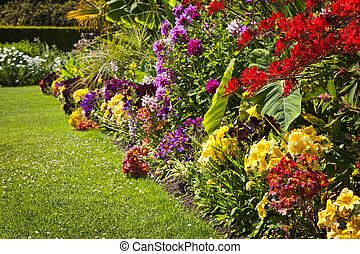 красочный, сад, цветы
