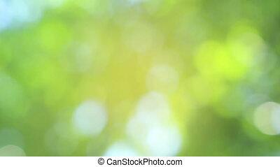 круг, зеленый, задний план, размытый