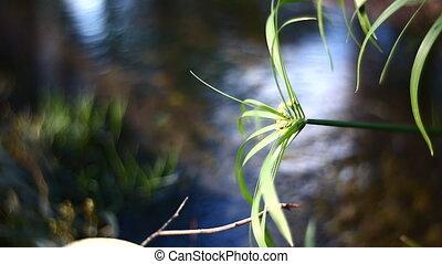 крупным планом, растение, лист, задний план