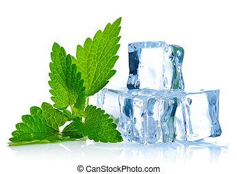 куб, лист, мелисса, лед