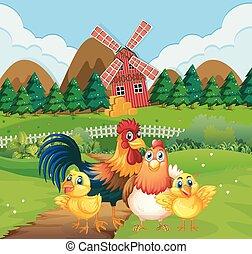 курица, сельхозугодий, семья
