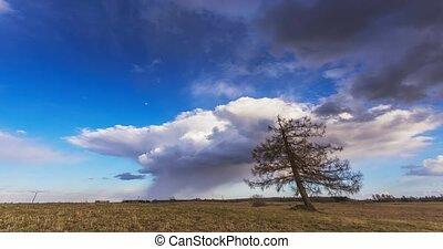 кучевые облака, дерево, clouds, поле, над, перемещение, ...