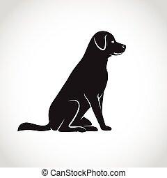 лабрадор, образ, собака, вектор, задний план, белый
