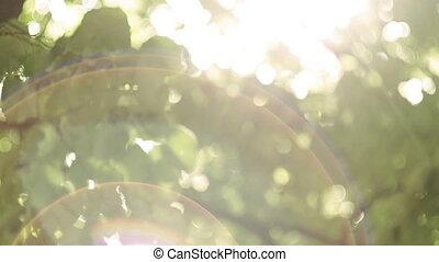 легкий, leaves, через, bokeh, солнце