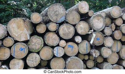 лесистая местность, жук, дерево, бедствие, logs, свая, транспорт, хвойное дерево, лай, резка, готов, trees