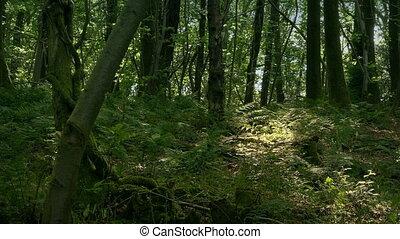 лесистая местность, лето, тенистый, день