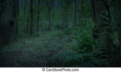 лесистая местность, перемещение, выстрел, сумрак