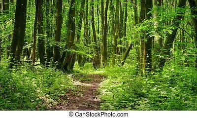 лесистая местность, солнечно, над, дорожка, перемещение,...