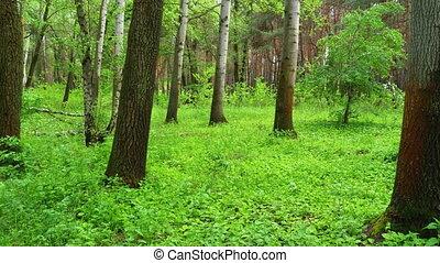 лесистая местность, steadicam, зеленый, forest., landscape...