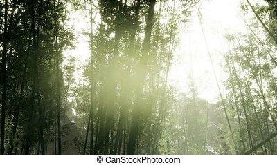 лесок, arashiyama, бамбук, спокойный, ветреный