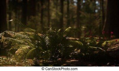 лесок, sequoias, солнечный лучик, рано, утро, mariposa