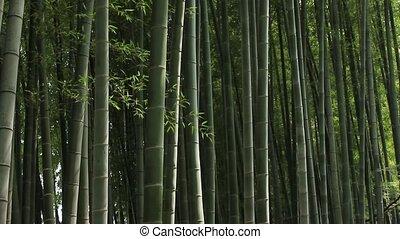 лес, бамбук