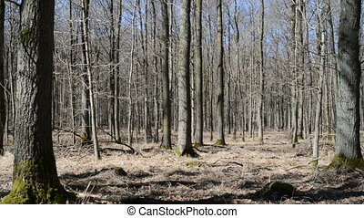 лес, весна