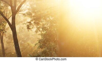 лес, восход, shadows, лиственница, солнечный лучик