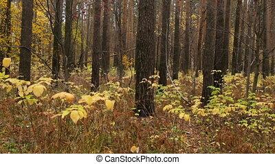 лес, время года, осень