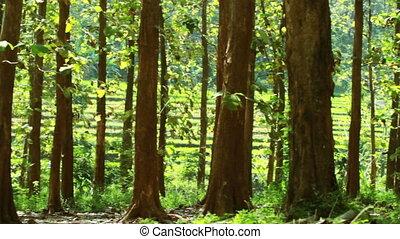 лес, в, весна