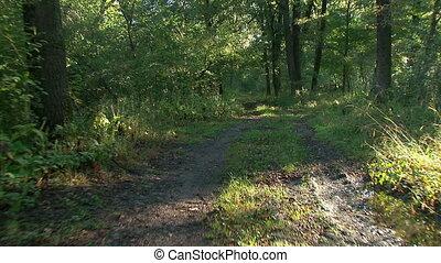 лес, в, восход, -, steadicam, выстрел