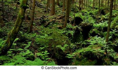 лес, дикий, чешский, mountains