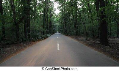 лес, дорога
