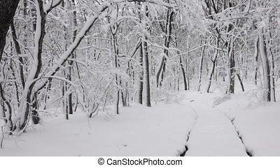 лес, дорога, панорама, зима