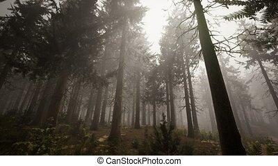лес, ель, натуральный, sunbeams